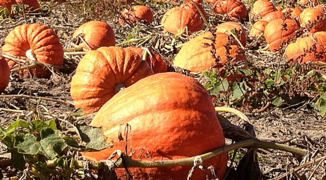 Pumpkin and Winter Squash Seed Giveaway